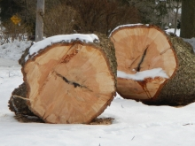Tree Rings Exposed