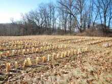 American Chestnut Foundation Nursery