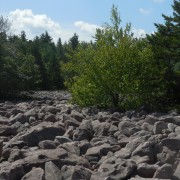 Trees Encroaching on Boulder Field