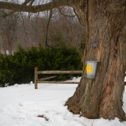 Maple Sugaring at Tyler Arboretum