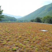 Green Roof in Pine Creek Valley