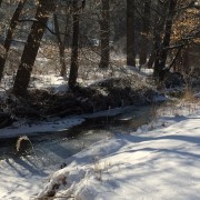Winter scene at a stream